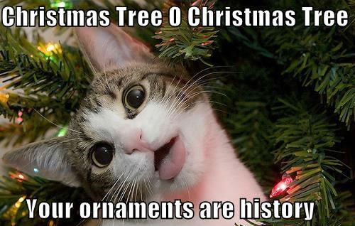 christmas-tree-cat-meme-011