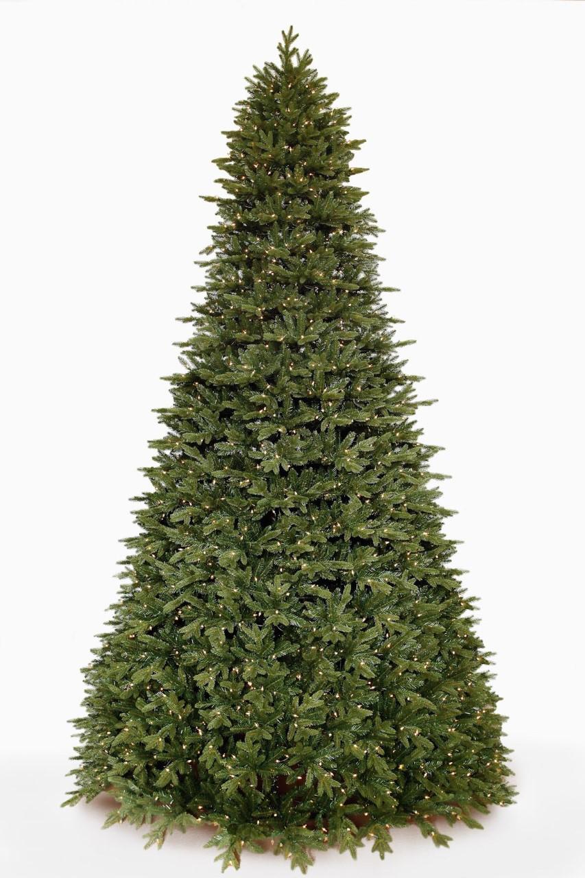 Giant Woodland Pine Tree.